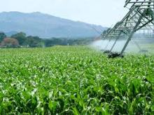 riego agrícola